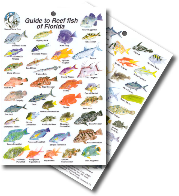 Florida freshwater fish species pictures images florida freshwater fish sciox Choice Image
