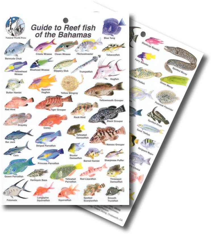 Fishing Cairns - Reef Fishing, Estuary Fishing & Sport Fishing