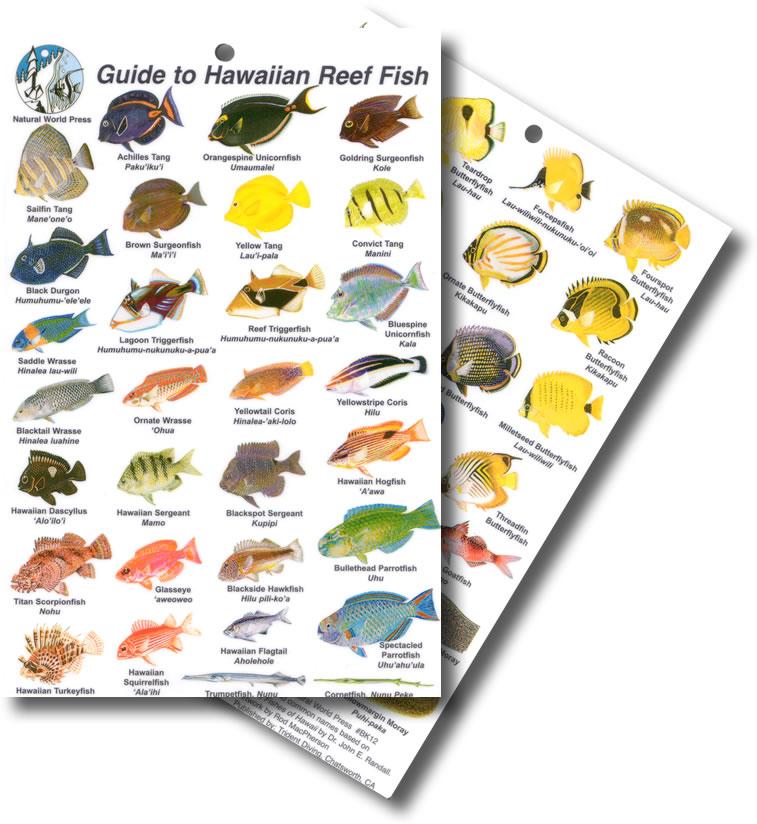 Divelogs hawaiian fish id card for Hawaiian fish names