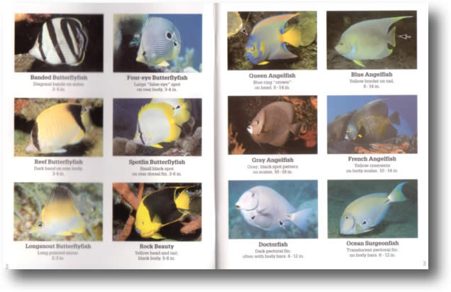 Florida Keys Reef Fish Identification http://www.dive-logs.com/productdetail.jsp?ProductCategory=13&ProductID=81