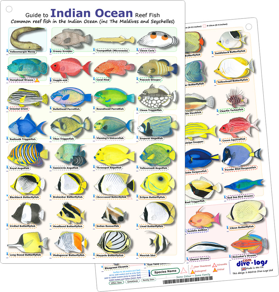 Image Gallery indian ocean fish