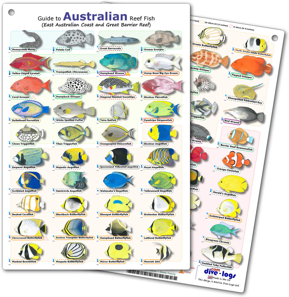 Reef Fish Identification Books by New World Publications